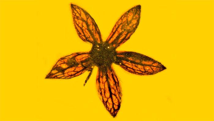Podría un dinosaurio haber ayudado a preservar esta flor