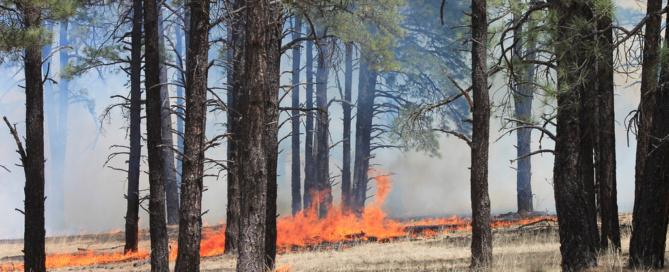 Evita incendios forestales para salvar a los arboles